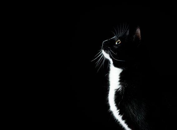 zwart/witte poes nieuwsgierig kijkend