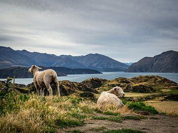 Schafe zählen von Rik Pijnenburg