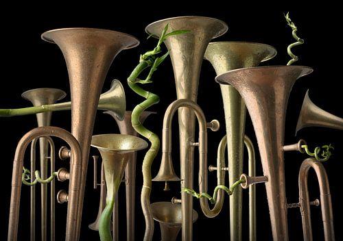 Trumpet Tree van