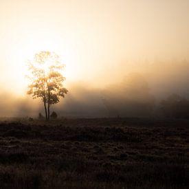 zonsopkomst Loenermark van Gerard Hol