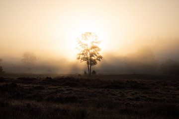 Sonnenaufgang Loenermark von Gerard Hol