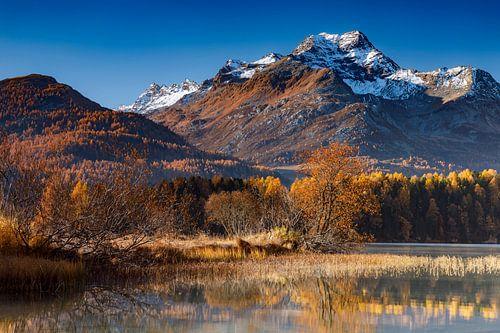 Herbst am Silsersee
