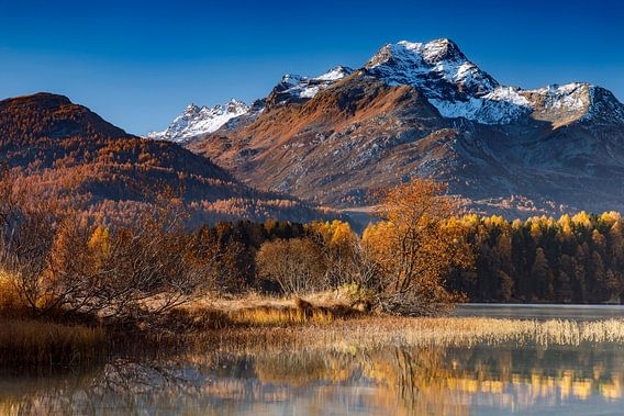 Herbst am Silsersee van Daniela Beyer