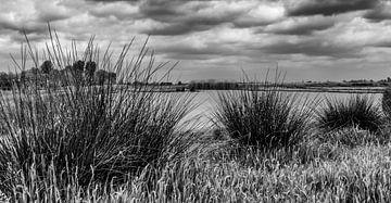Nieuwkoopse plassen... van Bert - Photostreamkatwijk