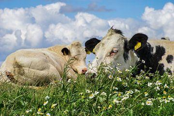 Koeien in het land (Friesland, Zwarte Haan) van Tieme Snijders