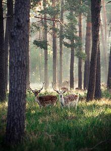 Herten in het ochtendgloren van