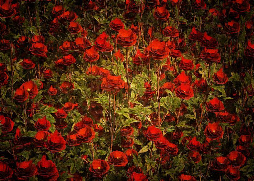 Rozen - La Sevillana roos van Jan Keteleer