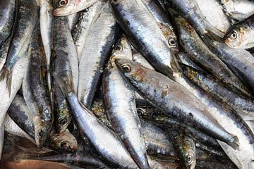 Sardines fraîches sur Rick van der Poorten