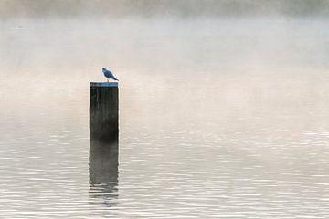Eenzaamheid van Peter Dane