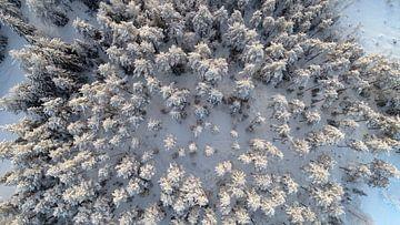 Topshot van een besneeuwd bos von Fields Sweden