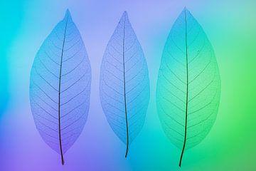 Skeletbladeren blauw, groen, paars van Karin Tebes