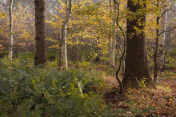 Bos in herfstkleuren van Peter Bolman