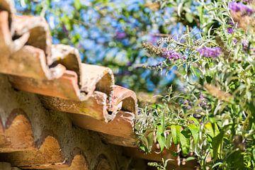Die Provence von Peter Leenen
