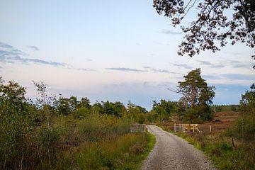 Fußweg zum Tor von Johan Vanbockryck