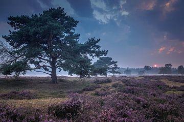 Zonsondergang boven een heideveld van Gerrit Veldman