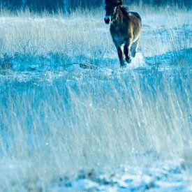 Horse in de the snow van Jouke Wijnstra Fotografie