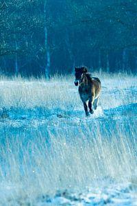 Pferd im Schnee von Jouke Wijnstra Fotografie