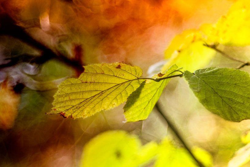 autumn leaves van anouk smit