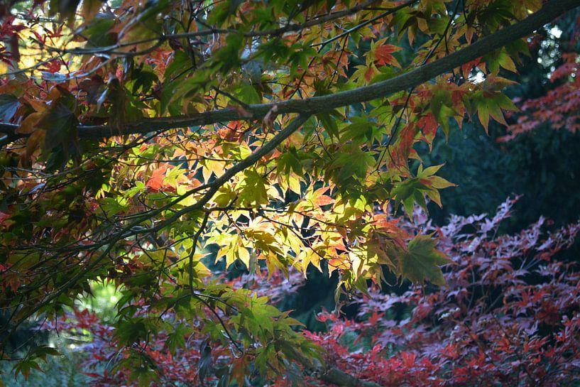 Herfst Licht van FotoGraaG Hanneke