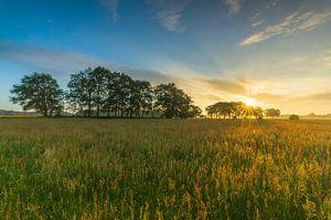 Landschap, zonsopkomst weiland met bomen
