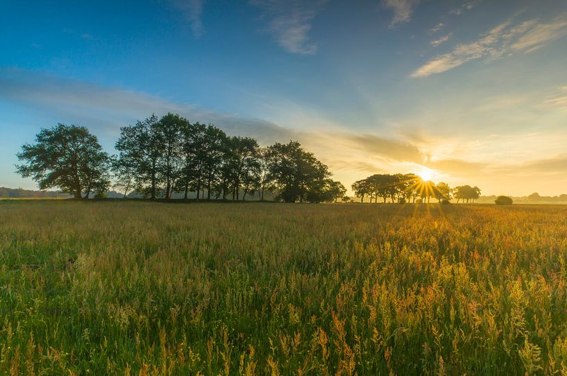 Landschap, zonsopkomst weiland met bomen van Marcel Kerdijk