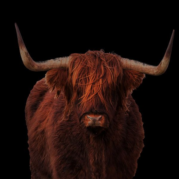 Portret van een Schotse hooglander van Menno Schaefer