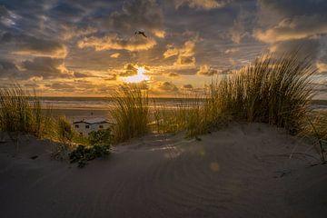 De schoonheid van de Hollandse duinen. van justus oostrum
