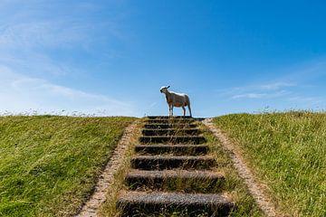 Schafe am oberen Ende der Treppe von Merijn Loch