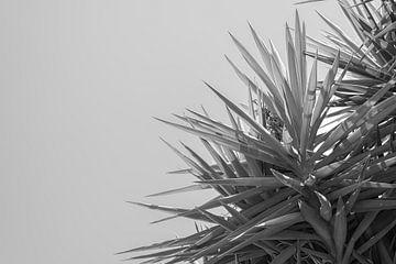 Zwart witte palmboom, Puglia van DsDuppenPhotography