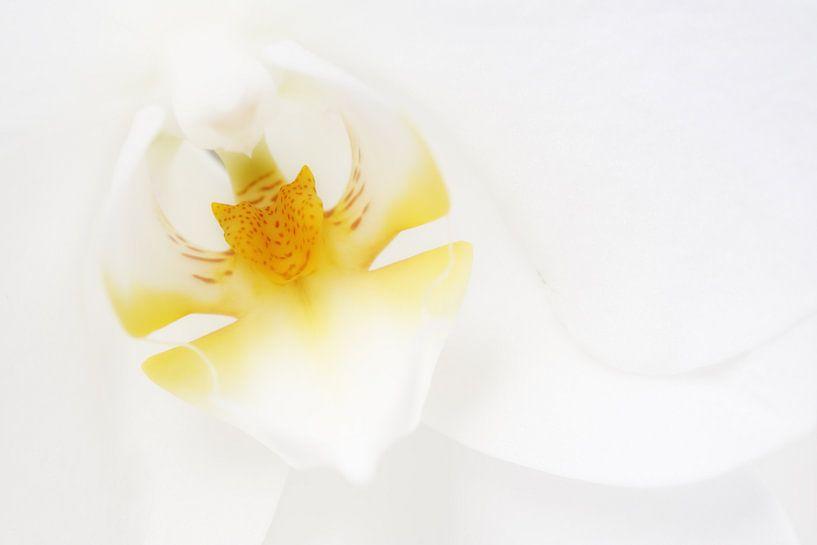In het wit gehuld... van LHJB Photography