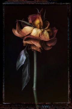 Alte Blumen 15 von Henk Leijen