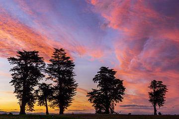 Rosa Wolken und Silhouetten von Bäumen bei Sonnenuntergang, Bay of Plenty, Neuseeland von Paul van Putten