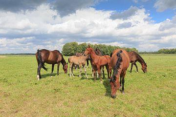 Een kudde paarden met veulens in een weidelandschap van Henk van den Brink