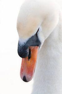 Swan von Shadia Bellafkih
