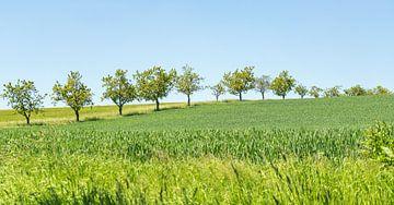 Zonnig lentelandschap van Achim Prill