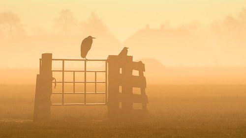 Een mistige zonsopgang