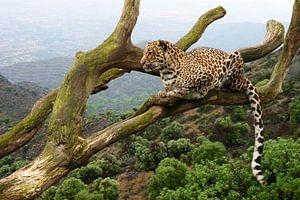 Luipaard in een boom van Dennis Schaefer
