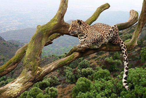 Luipaard in een boom von Dennis Schaefer