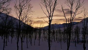 Umrisse kahler Bäume im Winter in Nordnorwegen von Timon Schneider