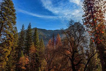 Herfst in Yosemite park van Rolf Linnemeijer