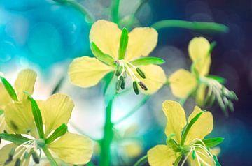 Gele bloemen van Corinne Welp