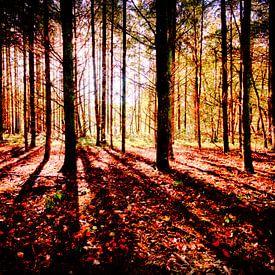 Soleil matinal dans la forêt sur Erik Reijnders