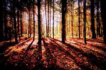 Soleil matinal dans la forêt