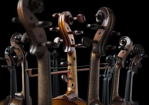 Diva de violina van