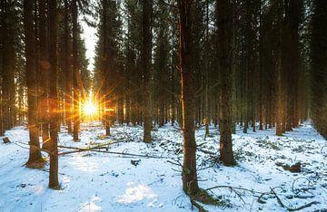 Sonnenaufgang im verschneiten Wald (Niederlande) von Marcel Kerdijk