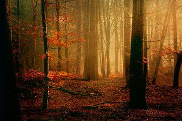 Landschap met beuk van Marijke van Loon