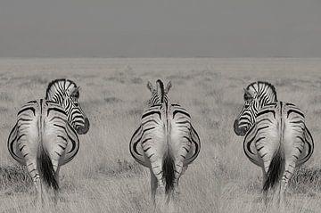 3 in einer Reihe, Zebras in Namibia schwarz und weiß von Linda Manzaneque