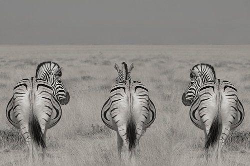 3 op een rij , zebra's in Namibie zwart wit van Linda Manzaneque