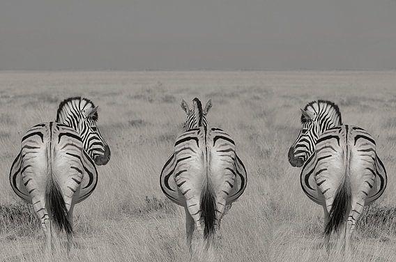 3 op een rij , zebra's in Namibie zwart wit