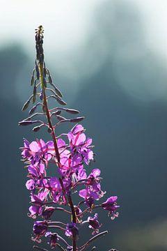 Paarse bloem van Miranda Rijnen